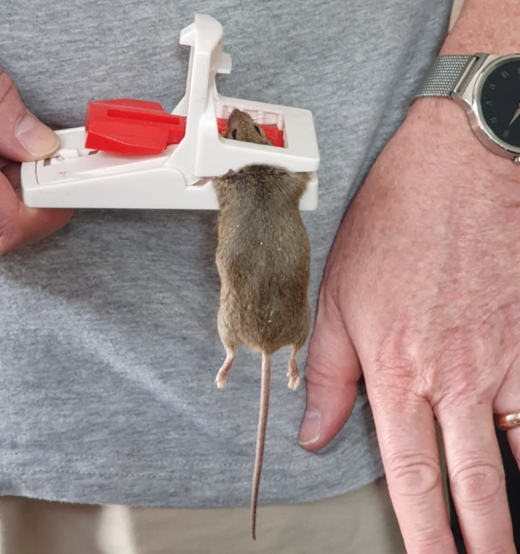 Mouse 2 CROPPED